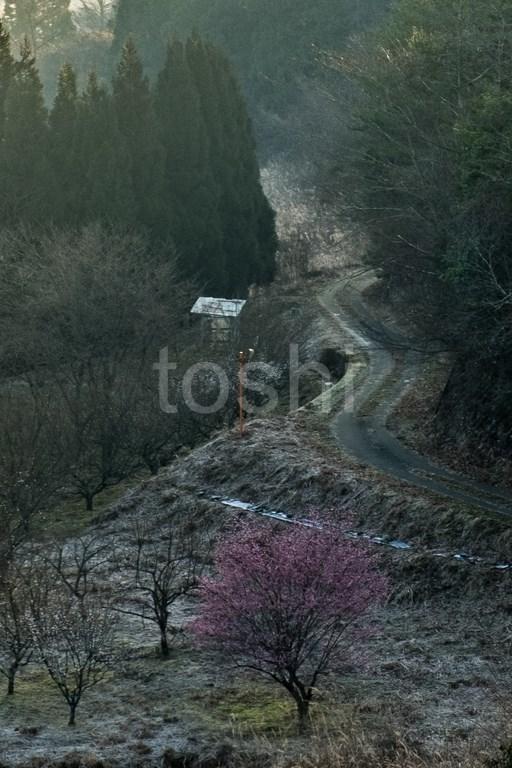 春は近い_c0350572_18423286.jpg