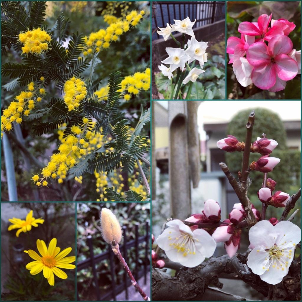 我が家の庭_f0110089_14024546.jpg