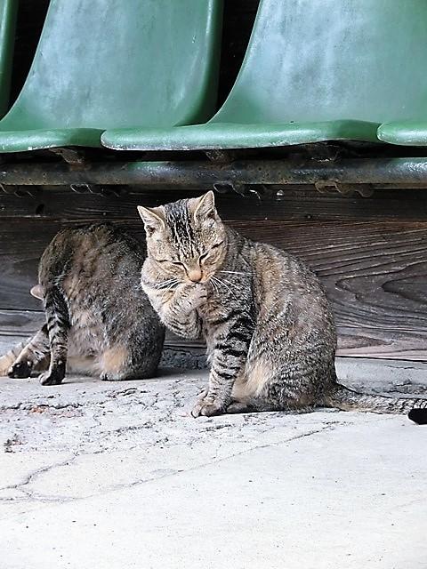 藤田八束の鉄道写真@路面電車の魅力を鹿児島で発見、観光資源として重要、観光事業を成功させる秘訣は鉄道事業を使うこと_d0181492_14300075.jpg