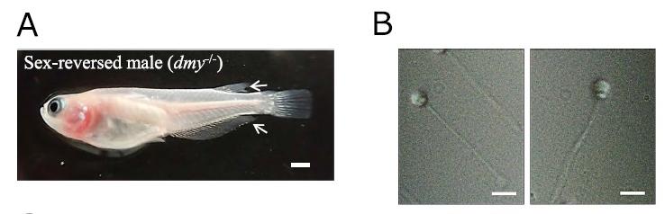メダカを孵化後しばらく緑色光下で飼育するとオスに性転換するメスが出てくる_c0025115_22071033.jpg