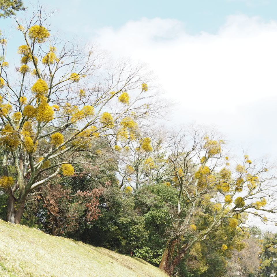 松山へ_b0206421_11083079.jpg