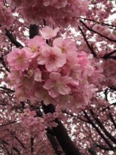 ♡3月のお知らせ♡と近況です_e0131324_06474808.jpg