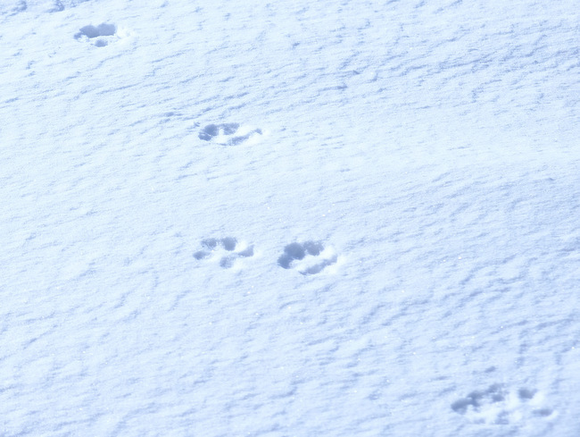 「真冬の知床羅臼根室の旅 野付半島 氷平線ウォーク」_a0000029_21192718.jpg