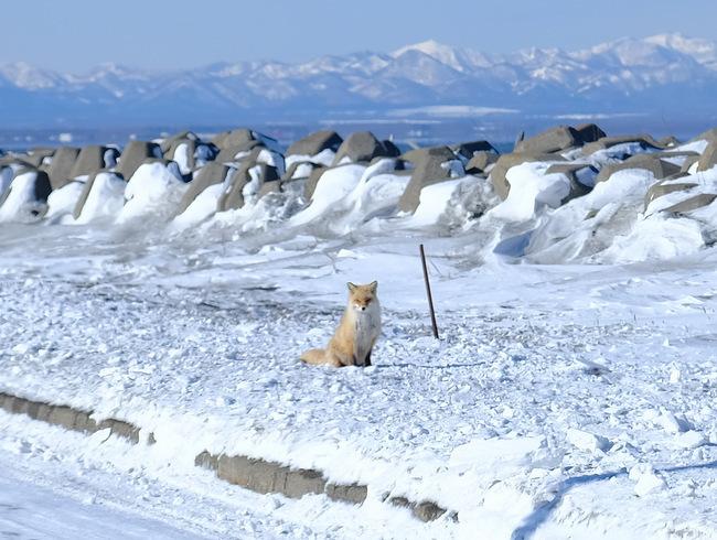 「真冬の知床羅臼根室の旅 野付半島 氷平線ウォーク」_a0000029_21461649.jpg