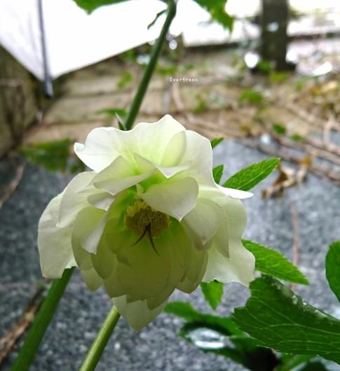 3/4(月)①    秘密の花園 ~ 春 ~_d0362666_20340824.jpg