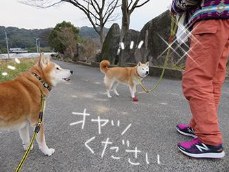 赤い靴〜と珊瑚のボール遊び動画_b0057675_20263621.jpg