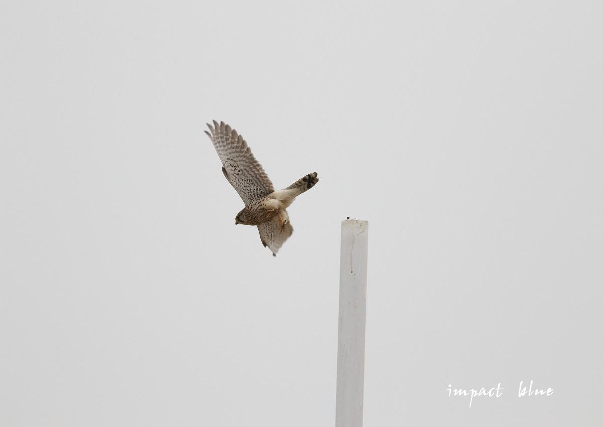 河川敷にて(^^)/_a0355908_20200883.jpg