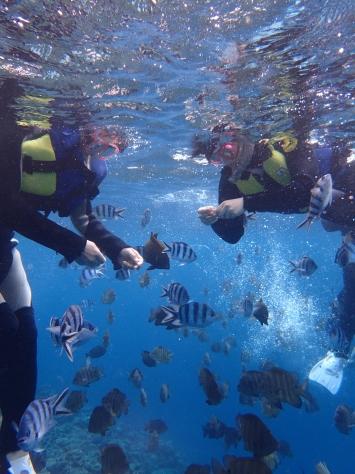 3月5日サンゴの日!!くるくる変わる気候ですね~~~!_c0070933_20494542.jpg