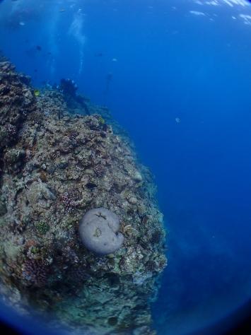 3月5日サンゴの日!!くるくる変わる気候ですね~~~!_c0070933_21151795.jpg