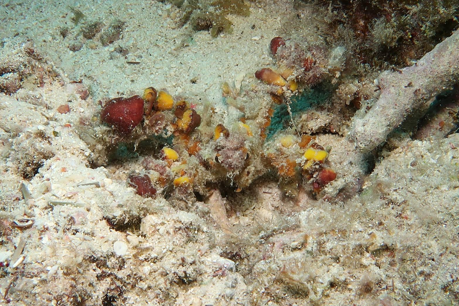 3月5日サンゴの日!!くるくる変わる気候ですね~~~!_c0070933_21160912.jpg