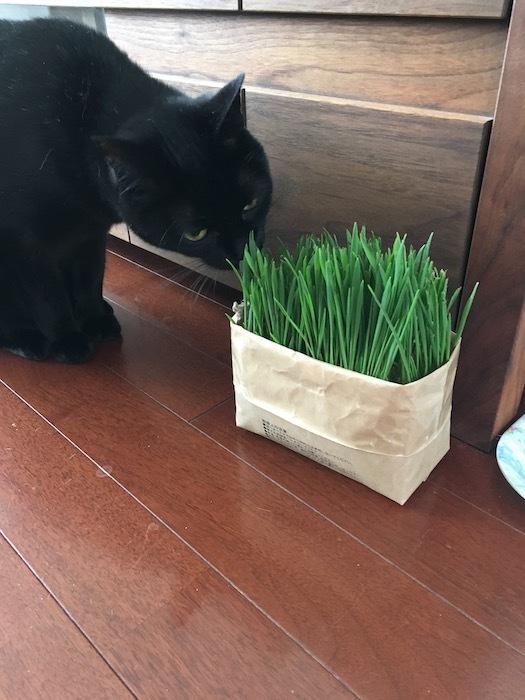 猫草は半分遊び?_e0359436_10353323.jpg