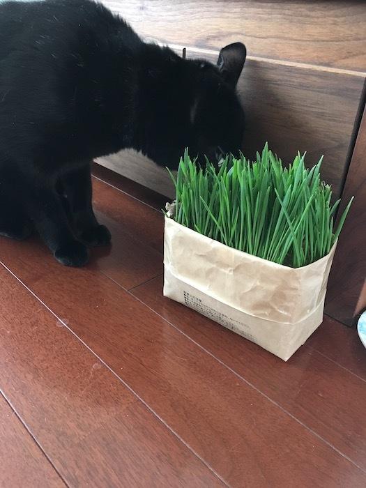 猫草は半分遊び?_e0359436_10353639.jpg