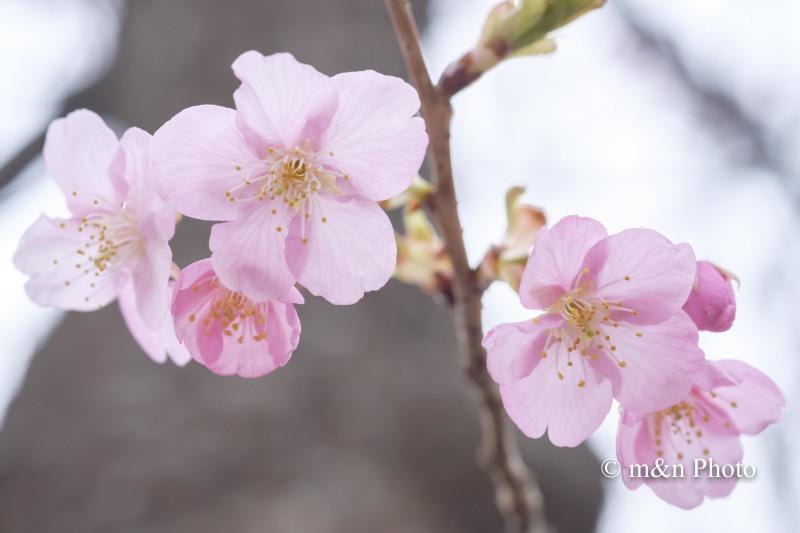 春色_e0321360_00085333.jpg