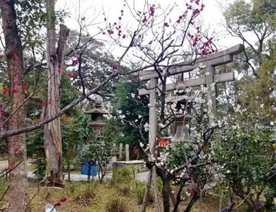 梅と御朱印と大阪場所山響部屋激励会と♪_b0194861_12312359.jpg