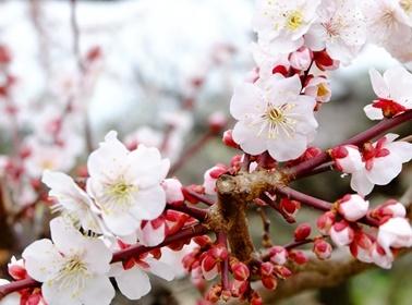 梅と御朱印と大阪場所山響部屋激励会と♪_b0194861_12460669.jpg