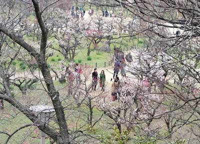 梅と御朱印と大阪場所山響部屋激励会と♪_b0194861_13503203.jpg