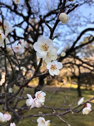 金沢の旅①~どこから観ても完璧の美「兼六園」_e0078071_19431584.jpg