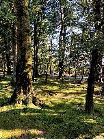 金沢の旅①~どこから観ても完璧の美「兼六園」_e0078071_19433629.jpg