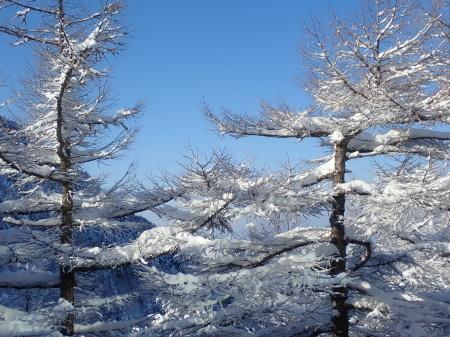 雪景色の朝_e0120896_08300217.jpg