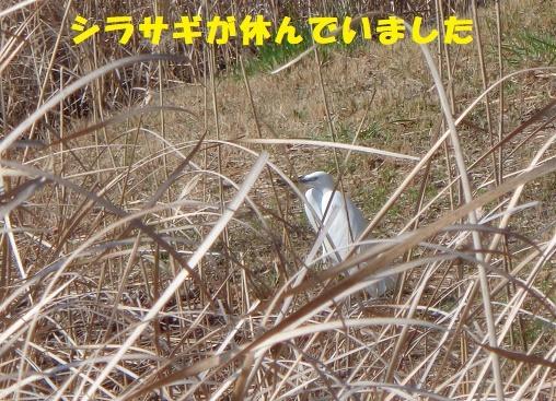 f0121712_15261733.jpg