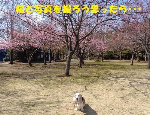 f0121712_15404752.jpg