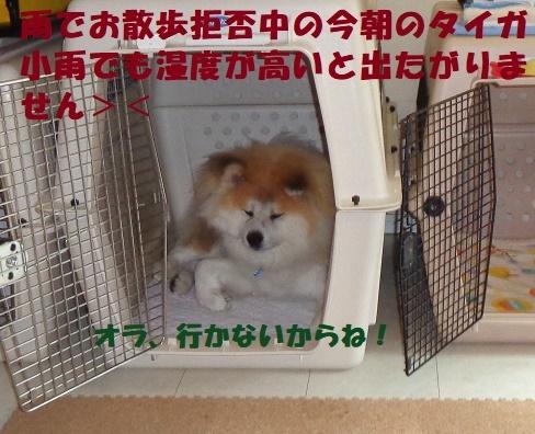 f0121712_15594241.jpg