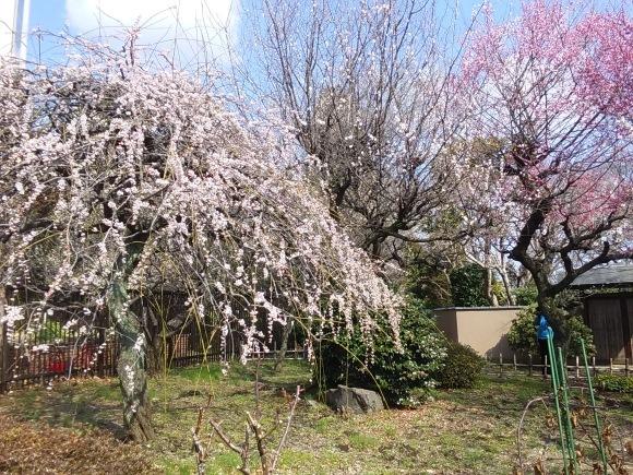 春、うらら、、梅林にて_d0116059_21161867.jpg