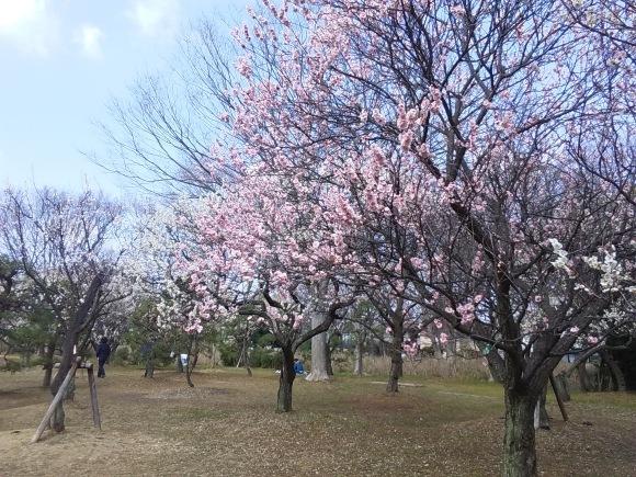 春、うらら、、梅林にて_d0116059_21170556.jpg