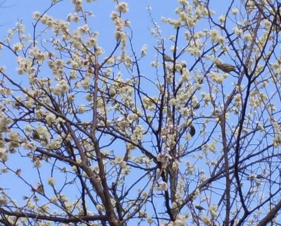 春、うらら、、梅林にて_d0116059_21203148.jpg