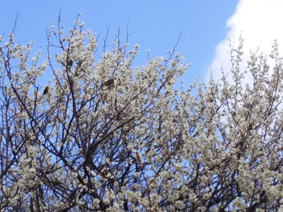 春、うらら、、梅林にて_d0116059_21212641.jpg
