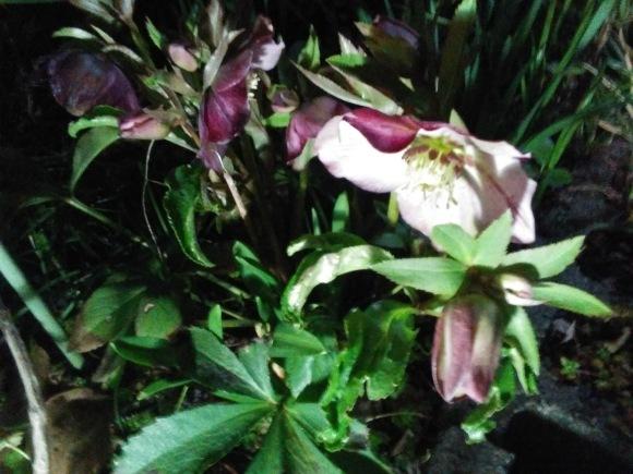 春、うらら、、梅林にて_d0116059_21263496.jpg