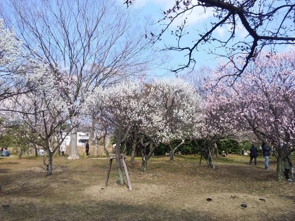 春、うらら、、梅林にて_d0116059_21312482.jpg