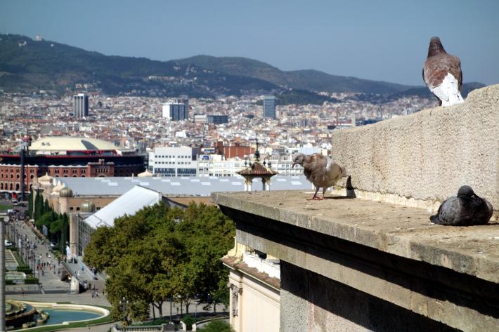 ミロ美術館 Fundació Joan Miró フニクラ Funicular De Montjuic モンジュイックの丘 2018年9月 バルセロナの旅(15)_f0117059_12340663.jpg