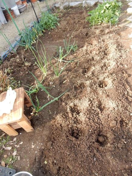 '19,3,6(水)ジャガイモ植えと「風と共に去りぬ」_f0060461_10513429.jpg