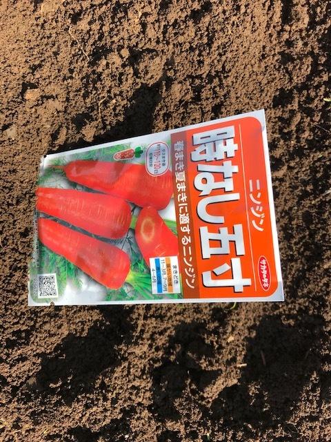 春キャベツ収穫&春大根種まき&ネギ発芽3・5_c0014967_07085473.jpg