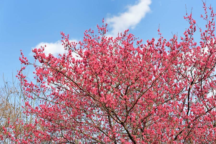梅の花_b0223668_20542445.jpg