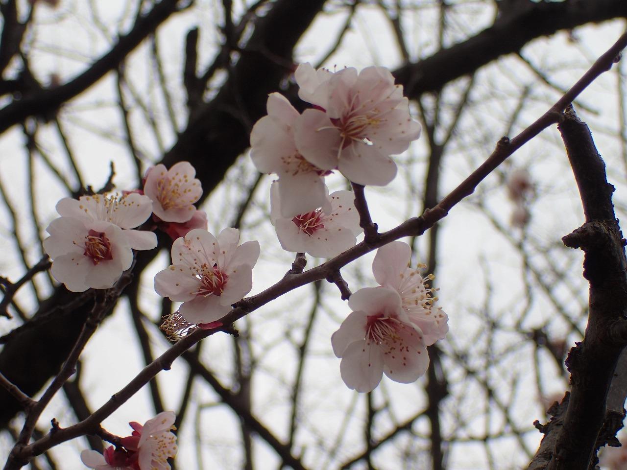 春咲く花たち_f0361087_14134640.jpg