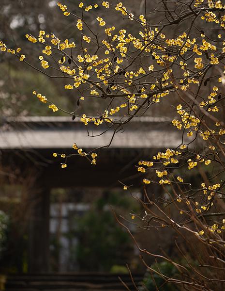 北鎌倉 明月院の丸窓とつるし雛_b0145398_00031416.jpg