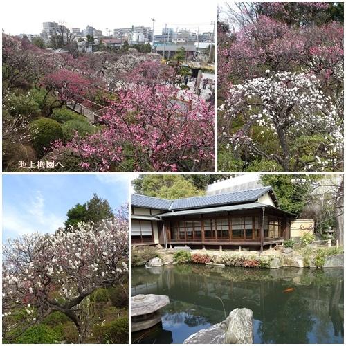 池上本門寺と池上梅園へ_c0051105_14361544.jpg