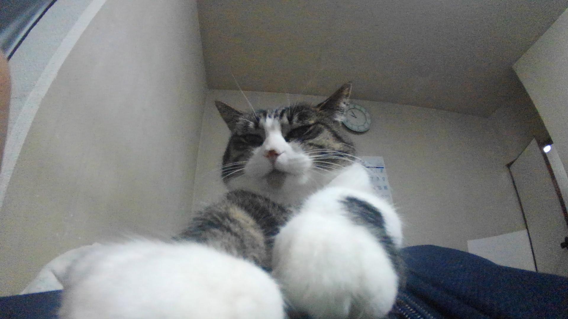 【猫】重いし…_f0141609_00393705.jpg