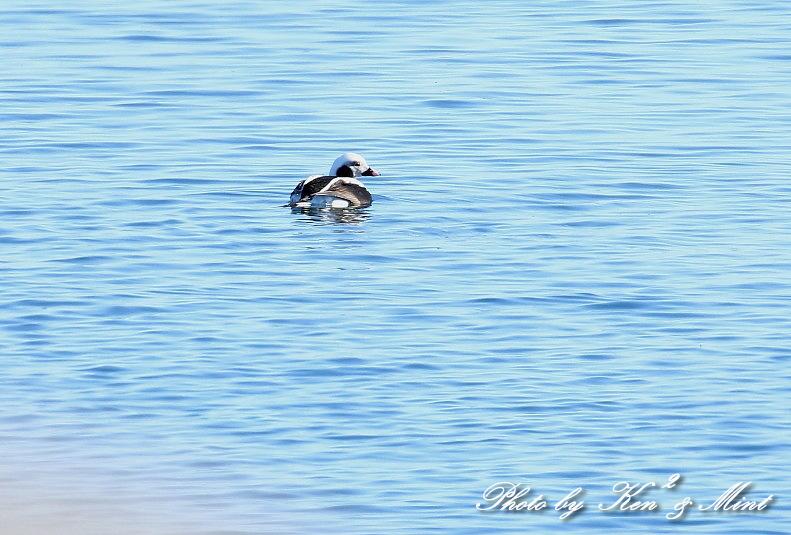 北の大地 遠征2日目 漁港巡りで会えた鳥さん♪_e0218518_22440057.jpg