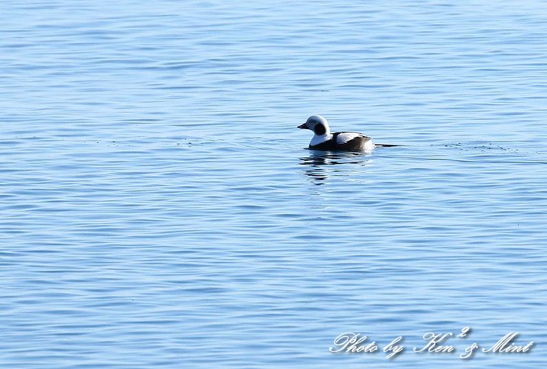 北の大地 遠征2日目 漁港巡りで会えた鳥さん♪_e0218518_22441866.jpg