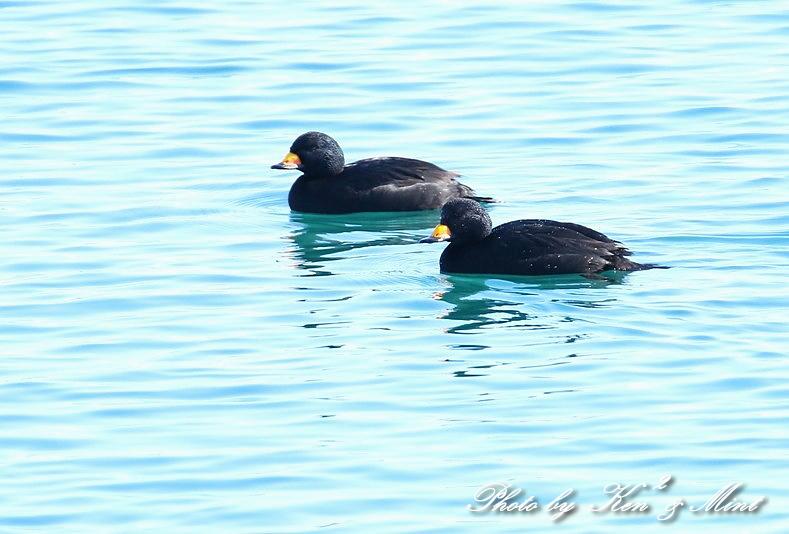北の大地 遠征2日目 漁港巡りで会えた鳥さん♪_e0218518_22445053.jpg