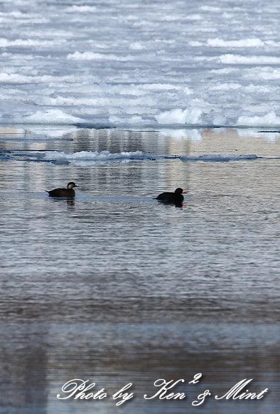 北の大地 遠征2日目 漁港巡りで会えた鳥さん♪_e0218518_22450153.jpg