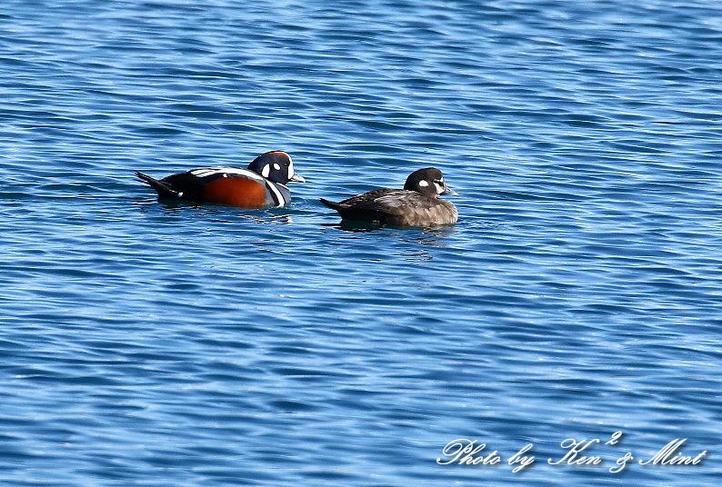 北の大地 遠征2日目 漁港巡りで会えた鳥さん♪_e0218518_22454230.jpg