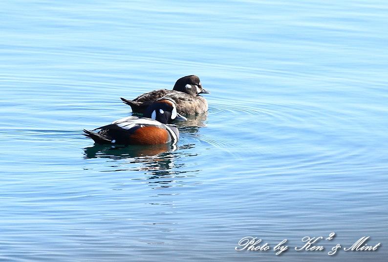 北の大地 遠征2日目 漁港巡りで会えた鳥さん♪_e0218518_22455981.jpg