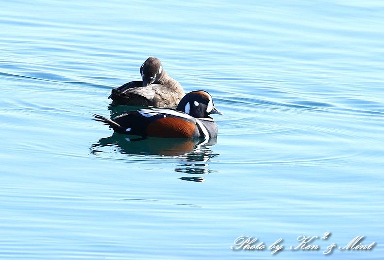 北の大地 遠征2日目 漁港巡りで会えた鳥さん♪_e0218518_22461473.jpg