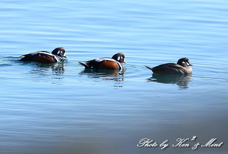 北の大地 遠征2日目 漁港巡りで会えた鳥さん♪_e0218518_22462446.jpg