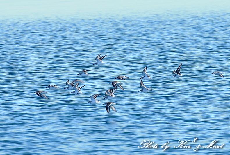 北の大地 遠征2日目 漁港巡りで会えた鳥さん♪_e0218518_22471407.jpg