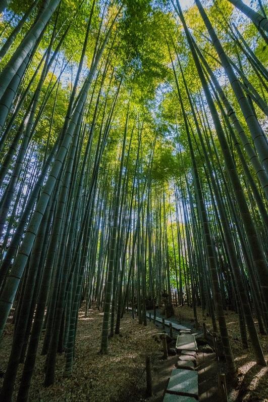 鎌倉~金沢街道・報国寺_e0363038_10432446.jpg
